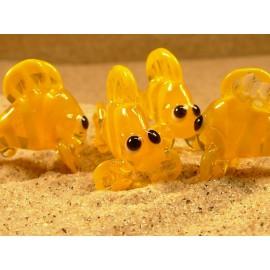 ryba žlutá