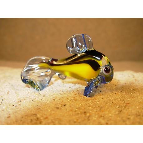 ryba modrožlutá