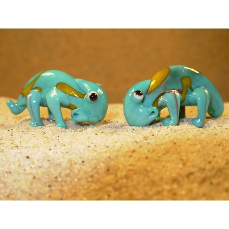chameleon modrožlutý