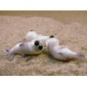 tuleň malý