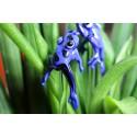 pralesnička modrá do květináče