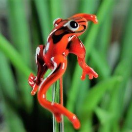 pralesnička červená do květináče