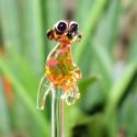 surikata do květináče