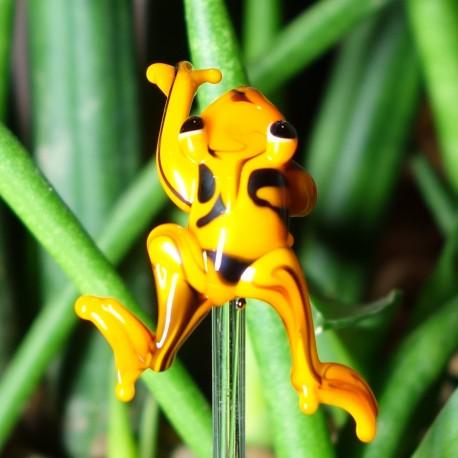 pralesnička oranžová do květináče