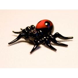 pavouk stepník rudý