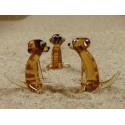 surikata sedící
